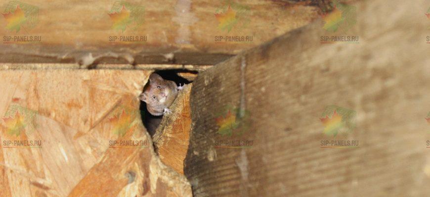 мыши сип панели
